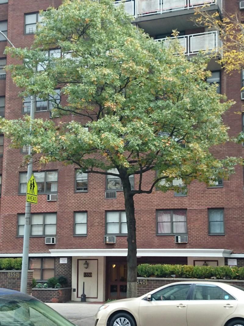 535 East 87th Street #2B